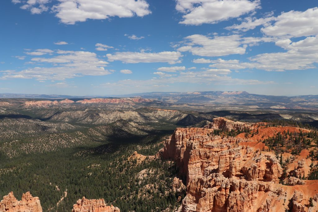 Trees, Bryce Canyon